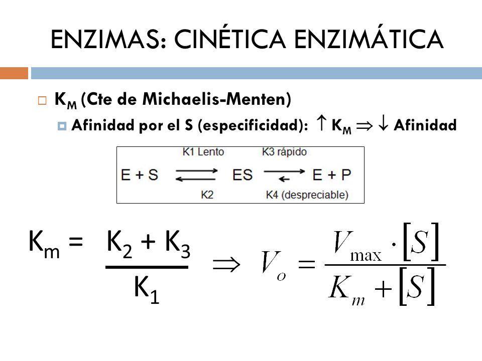 ENZIMAS: CINÉTICA ENZIMÁTICA K M (Cte de Michaelis-Menten) Importancia Km = [ S ] fisiológica V enzimática a [ ] fisiológica Afinidad por el S (especificidad): K M Afinidad Km a partir de la ecuación de Vo de M-M Km a partir de la K 1 (limitante): E + S ES K 1