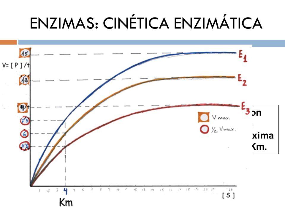 ENZIMAS: CINÉTICA ENZIMÁTICA K M (Cte de Michaelis-Menten) Enzimas con la misma Vmax y diferente KM (Si catalizan la misma reacción y sobre el mismo S serán isozimas