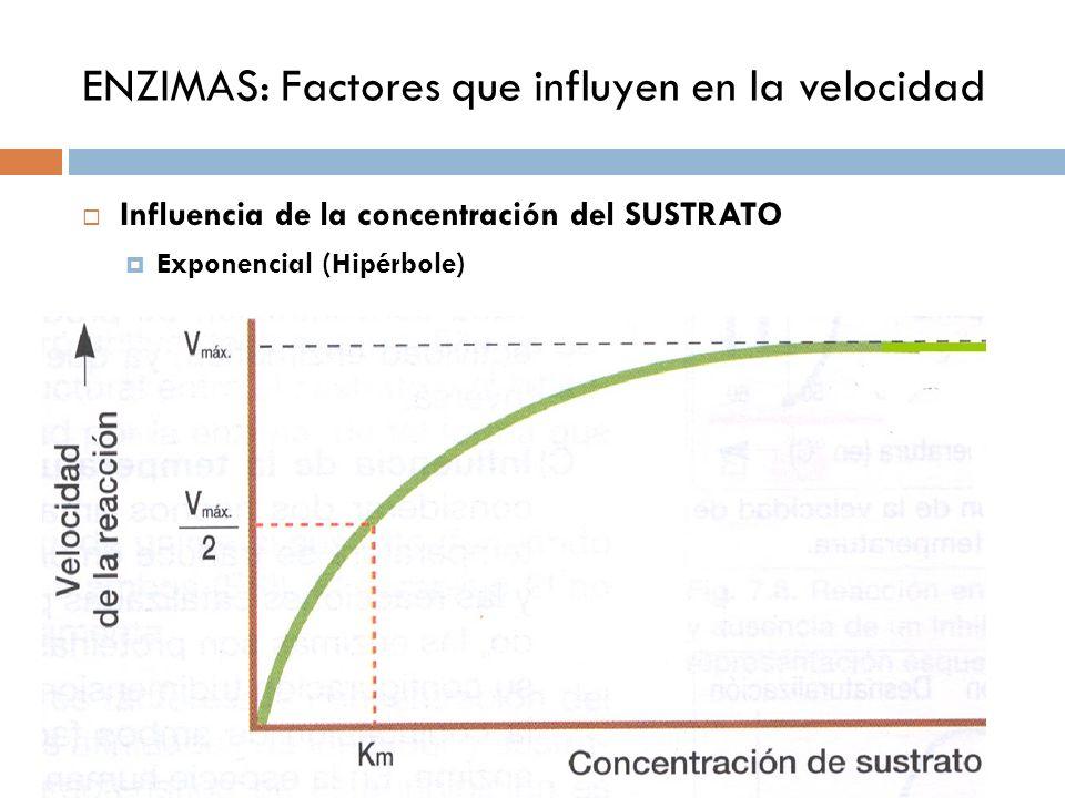 ENZIMAS: Factores que influyen en la velocidad Influencia de la concentración de ENZIMA.