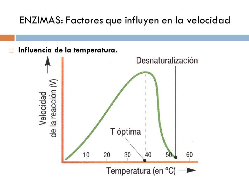 ENZIMAS: Regulación de la Actividad enzimática Necesidad de regulación y modos Regulación por Km Activación: cationes (Ca 2+, Mg 2+ ), el sustrato, etc.