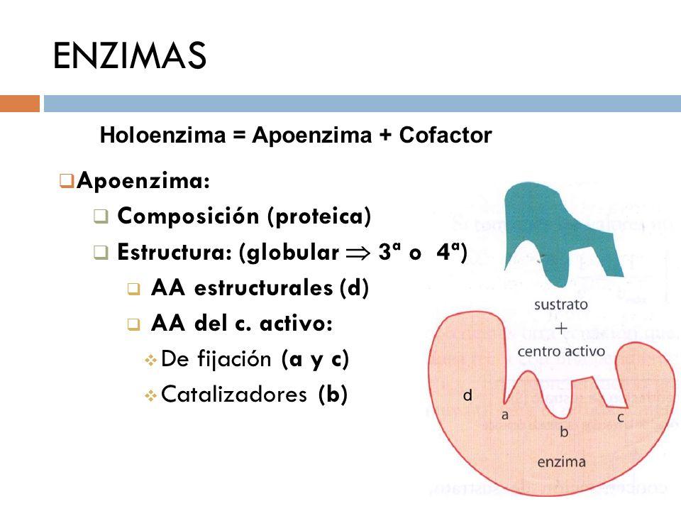ENZIMAS Apoenzima: Composición (proteica) Estructura: (globular 3ª o 4ª) AA estructurales (d) AA del c. activo: De fijación (a y c) Catalizadores (b)