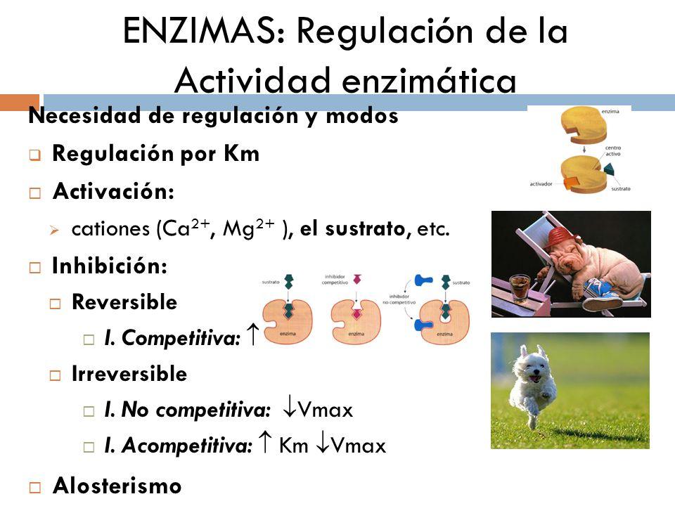 ENZIMAS: Regulación de la Actividad enzimática Necesidad de regulación y modos Regulación por Km Activación: cationes (Ca 2+, Mg 2+ ), el sustrato, et