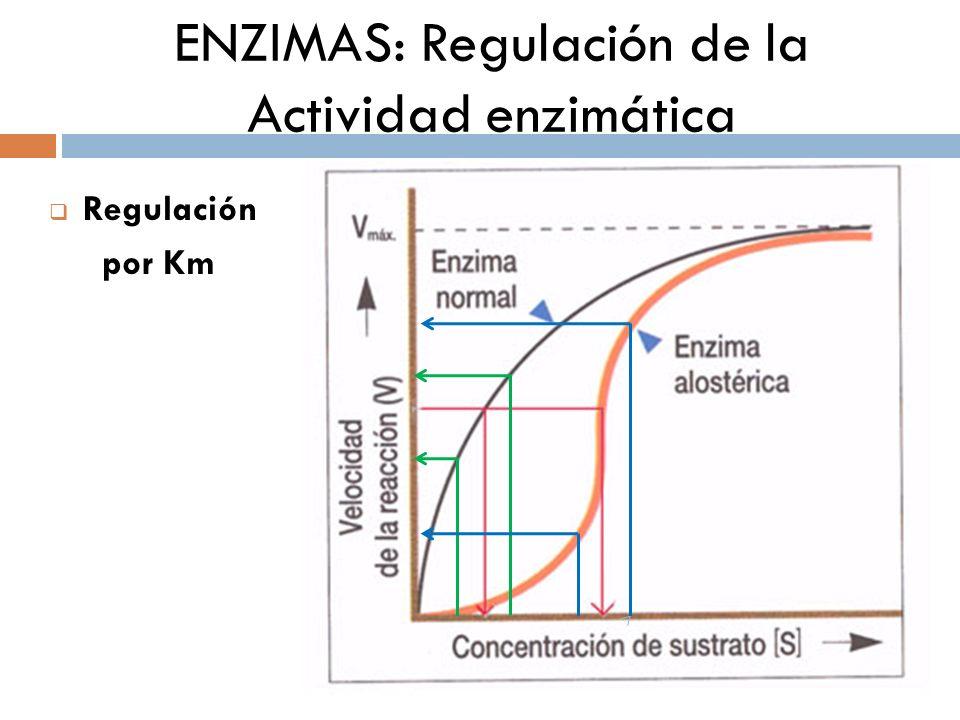 ENZIMAS: Regulación de la Actividad enzimática Activación: cationes (Ca 2+, Mg 2+ ) el sustrato etc.
