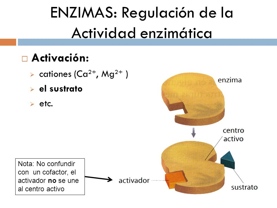 ENZIMAS: Regulación de la Actividad enzimática Activación: cationes (Ca 2+, Mg 2+ ) el sustrato etc. Nota: No confundir con un cofactor, el activador