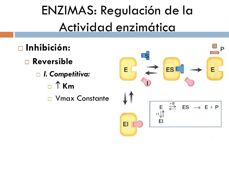 ENZIMAS: Regulación de la Actividad enzimática Inhibición: Reversible I. Competitiva: Km Vmax Constante
