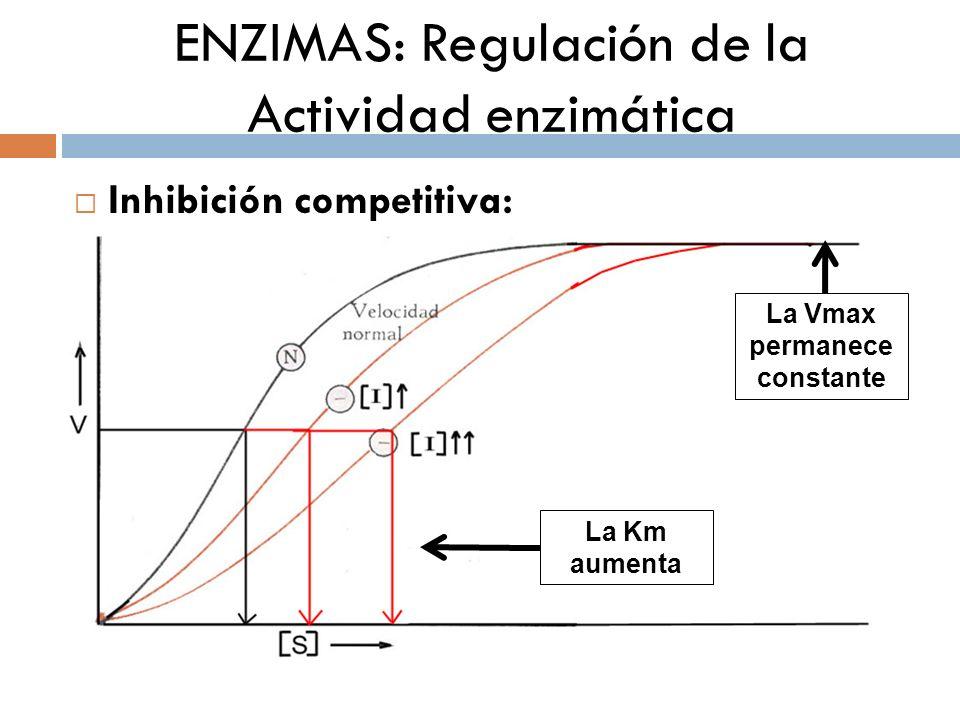 ENZIMAS: Regulación de la Actividad enzimática Inhibición competitiva: La Vmax permanece constante La Km aumenta