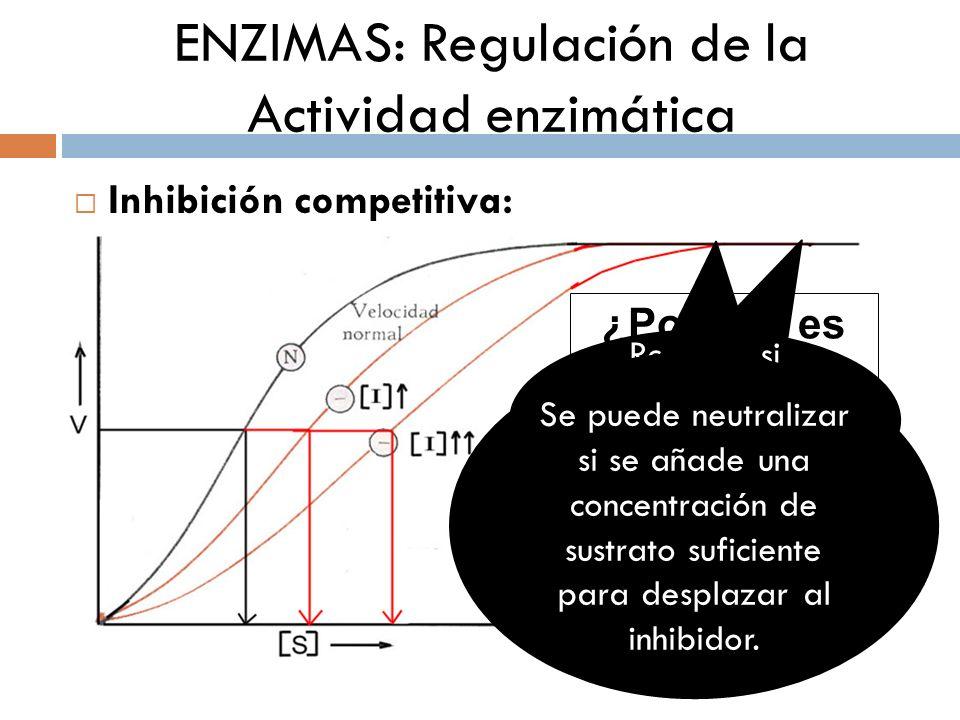 ENZIMAS: Regulación de la Actividad enzimática Inhibición competitiva: ¿Por qué es reversible? Revierte si aumentamos la concentración de sustrato Se