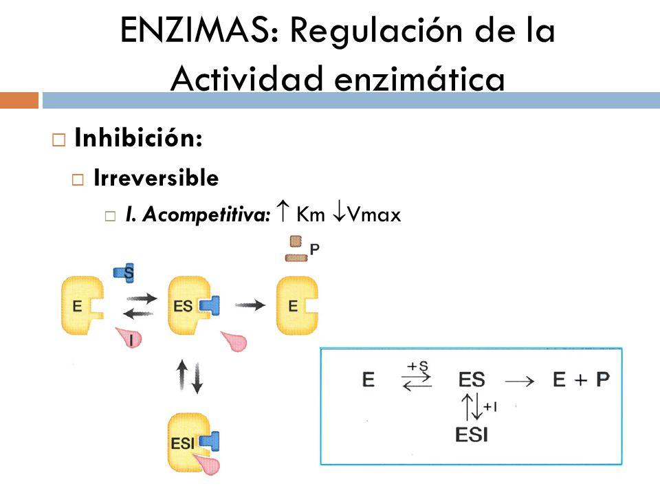 ENZIMAS: Regulación de la Actividad enzimática Inhibición: Irreversible I. Acompetitiva: Km Vmax