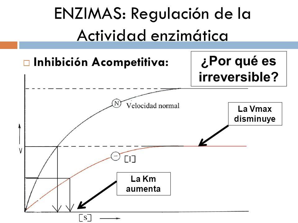 ENZIMAS: Regulación de la Actividad enzimática Inhibición Acompetitiva: La Vmax disminuye La Km aumenta ¿Por qué es irreversible?