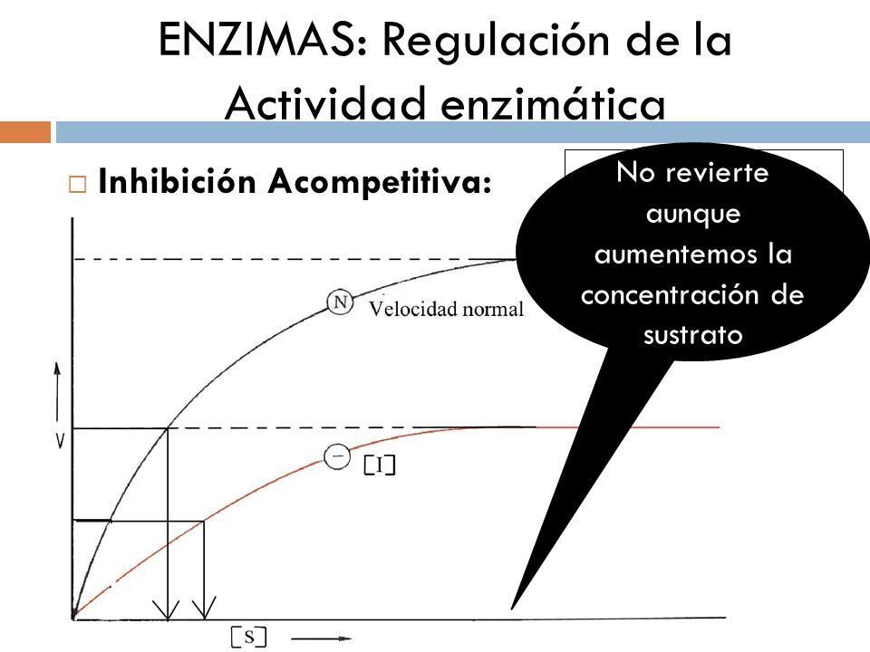 ENZIMAS: Regulación de la Actividad enzimática Inhibición Acompetitiva: ¿Por qué es irreversible? No revierte aunque aumentemos la concentración de su