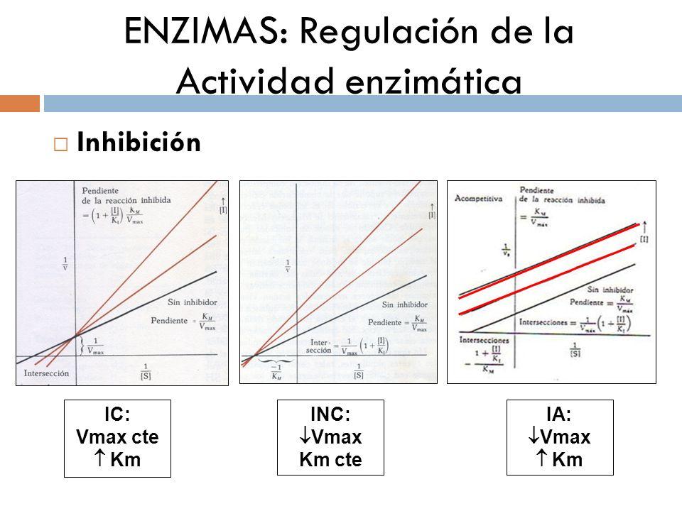 ENZIMAS: Regulación de la Actividad enzimática Nota: Inhibición Irreversible La mayoría de los libros de texto consideran la I.