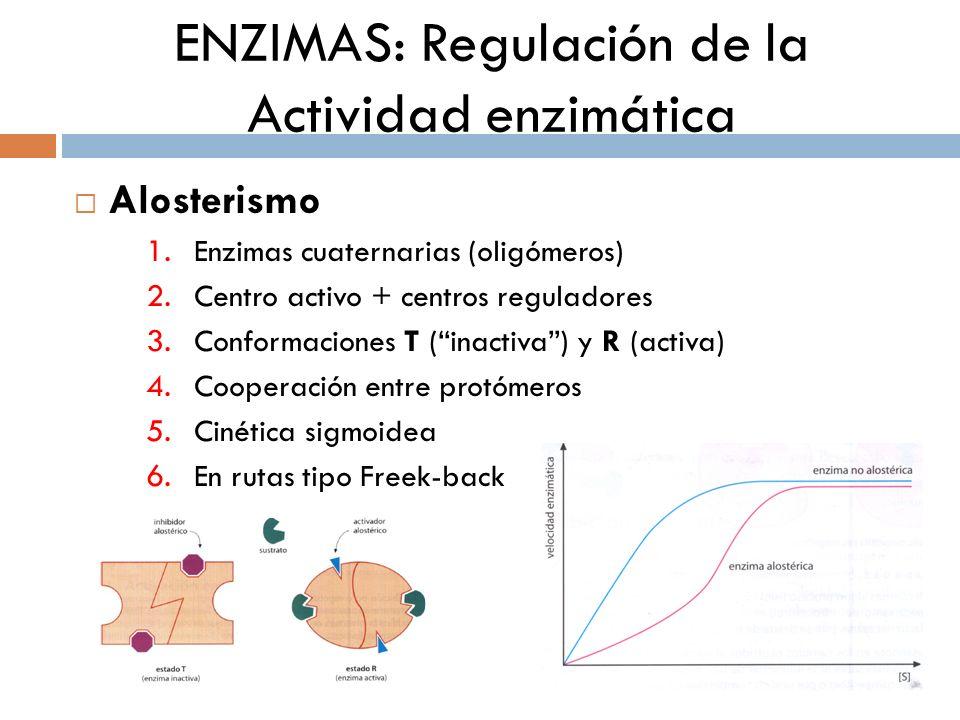 ENZIMAS: Regulación de la Actividad enzimática Alosterismo 1. Enzimas cuaternarias (oligómeros) 2. Centro activo + centros reguladores 3. Conformacion