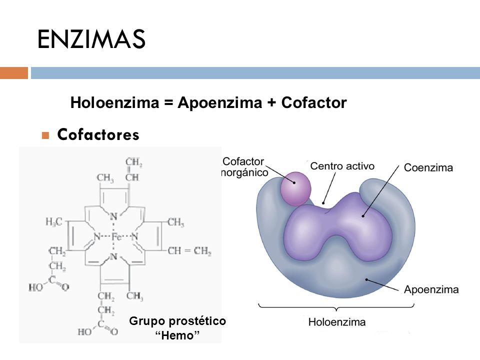 ENZIMAS Holoenzima = Apoenzima + Cofactor Cofactores Grupo prostético Hemo