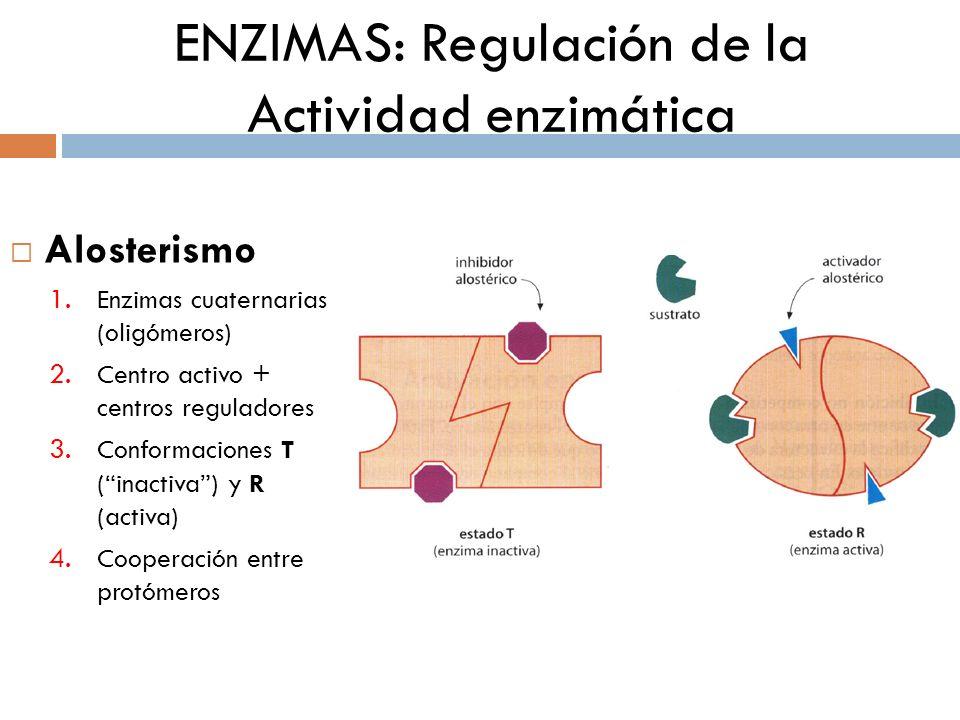ENZIMAS: Regulación de la Actividad enzimática Alosterismo: 5. Cinética sigmoidea