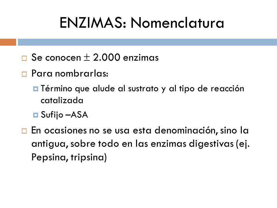 ENZIMAS: Nomenclatura Se conocen 2.000 enzimas Para nombrarlas: Término que alude al sustrato y al tipo de reacción catalizada Sufijo –ASA En ocasione