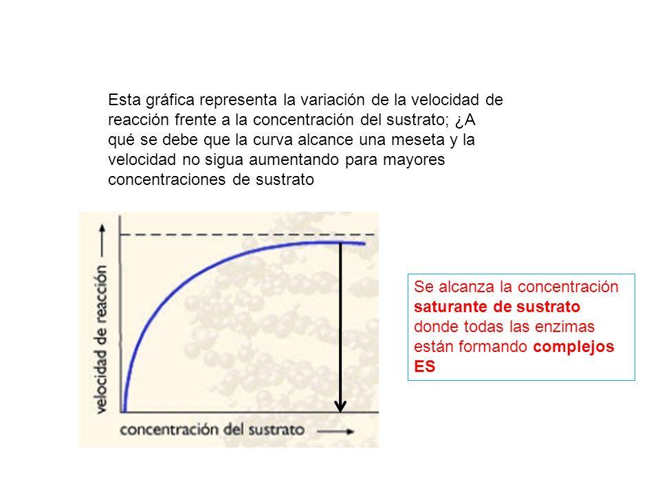 Esta gráfica representa la variación de la velocidad de reacción frente a la concentración del sustrato; ¿A qué se debe que la curva alcance una meset