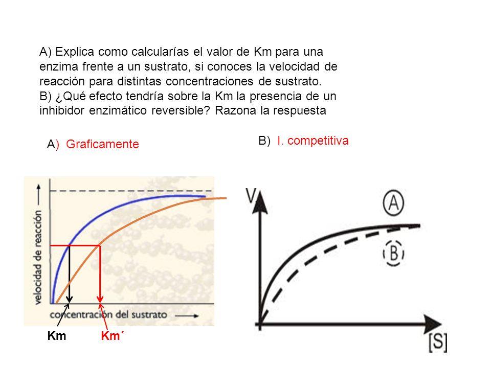 A) Explica como calcularías el valor de Km para una enzima frente a un sustrato, si conoces la velocidad de reacción para distintas concentraciones de