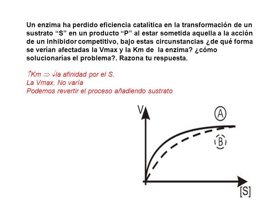 Un enzima ha perdido eficiencia catalítica en la transformación de un sustrato S en un producto P al estar sometida aquella a la acción de un inhibido