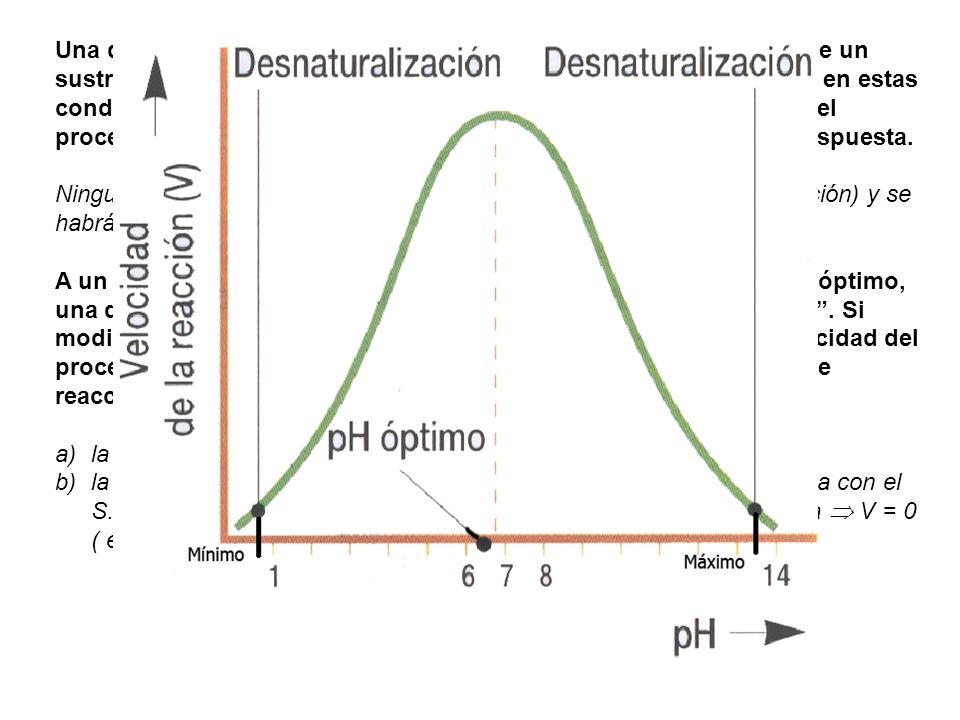 Cuando se representa la cinética de catálisis enzimática de una enzima frente a un sustrato, en diferentes condiciones de pH y la misma Tª de reacción, se obtiene el resultado de la figura.