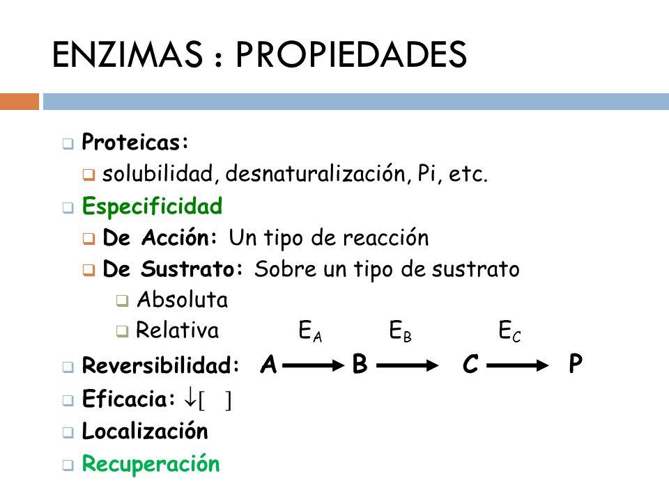 ENZIMAS : PROPIEDADES Proteicas: solubilidad, desnaturalización, Pi, etc. Especificidad De Acción: Un tipo de reacción De Sustrato: Sobre un tipo de s