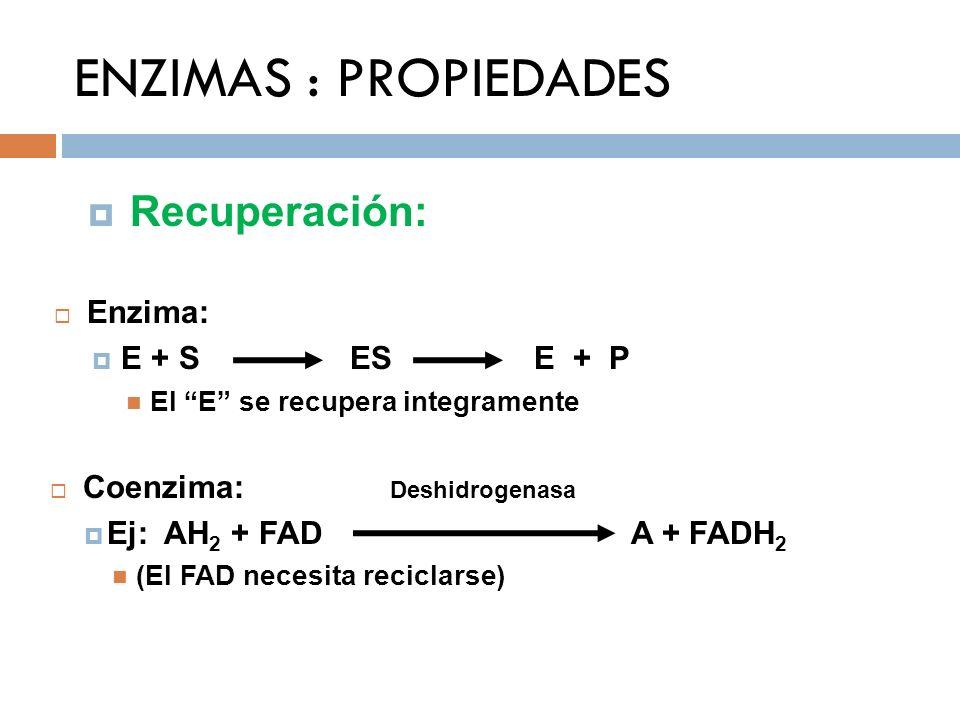 ENZIMAS : PROPIEDADES Recuperación: Enzima: E + S ES E + P El E se recupera integramente Coenzima: Deshidrogenasa Ej: AH 2 + FAD A + FADH 2 (El FAD ne