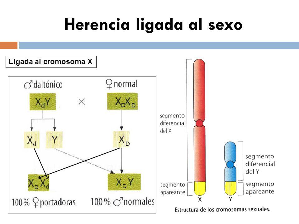 Herencia ligada al sexo Ligada al cromosoma X