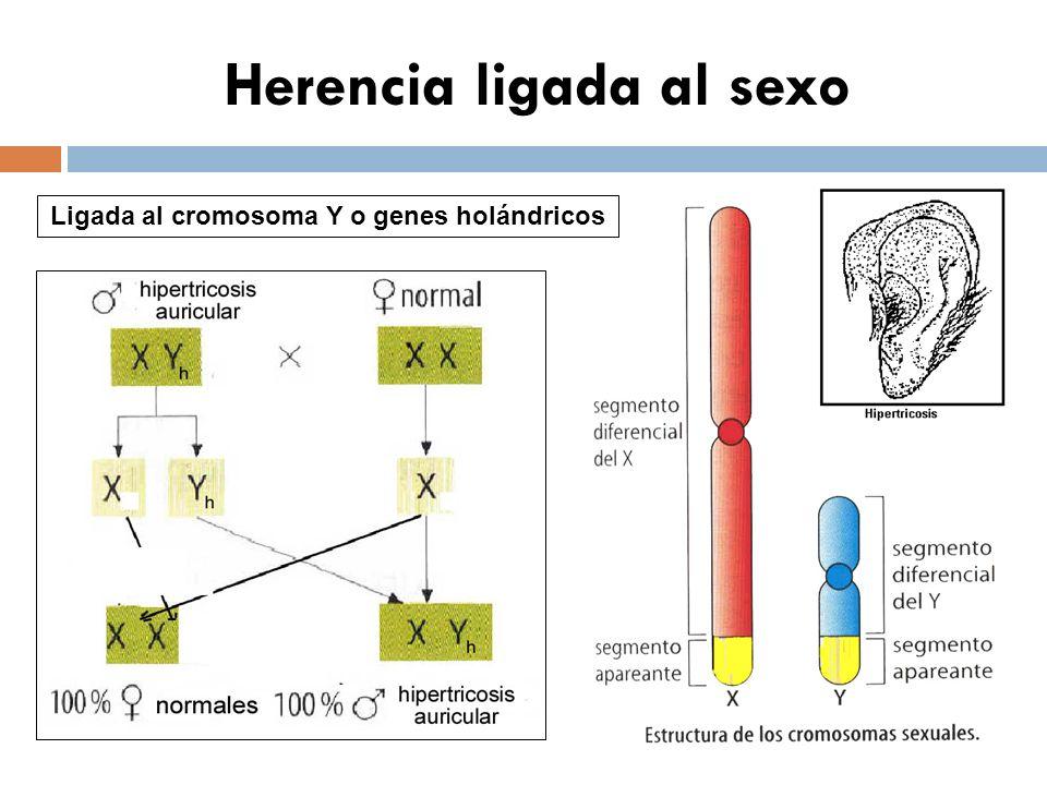 Herencia condicionada por el sexo P: A 1 A 2 x A 1 A 2 varón calvo hembra con pelo G: ½ A 1 ½ A 2 ½ A 1 ½ A 2 F: ¼ A 1 A 1 ½ A 1 A 2 ¼ A 2 A 2 Probabilidades ¼ calvas ¾ con pelo ¾ calvos ¼con pelo A 1 : pelo A 2 : calvicie A 1 > A 2 A 2 > A 1 DR