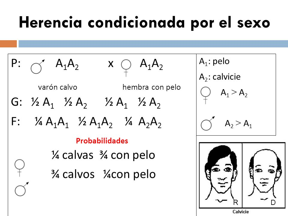 Herencia poligénica o cuantitativa A: piel oscura a: piel clara B: piel oscura b: piel clara A > a B > b