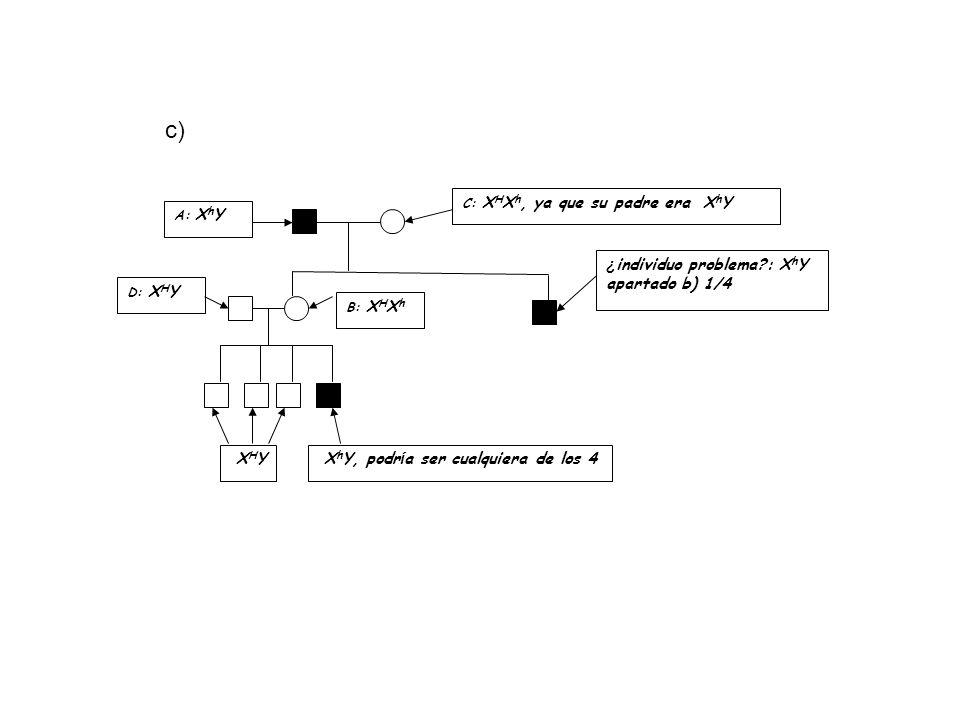 Representa un estudio de familia en el que siga la transmisión de un carácter recesivo ligado al sexo.