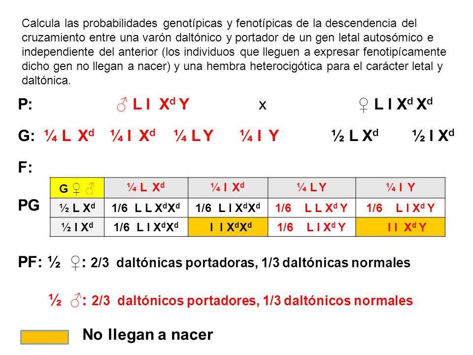 Calcula las probabilidades genotípicas y fenotípicas de la descendencia del cruzamiento entre una varón daltónico y portador de un gen letal autosómic