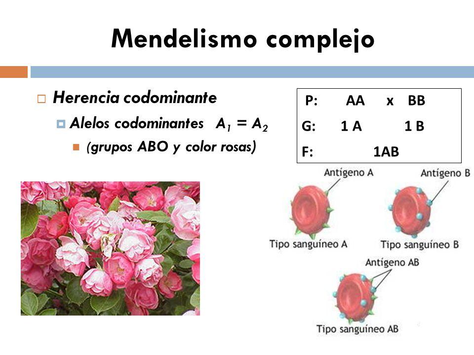 Mendelismo complejo Herencia codominante Alelos codominantes A 1 = A 2 ( grupos ABO y color rosas) P: AA x BB G: 1 A 1 B F: 1AB
