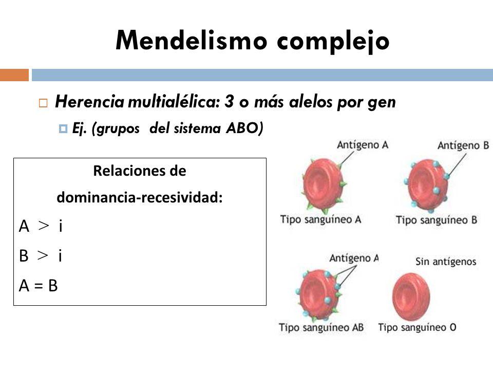Mendelismo complejo Herencia multialélica: 3 o más alelos por gen Ej. (grupos del sistema ABO) Relaciones de dominancia-recesividad: A > i B > i A = B