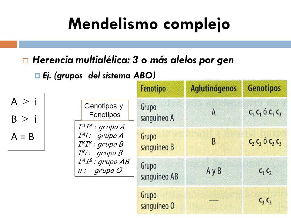 Mendelismo complejo Herencia multialélica: 3 o más alelos por gen Ej. (grupos del sistema ABO) A > i B > i A = B I A I A : grupo A I A i : grupo A I B
