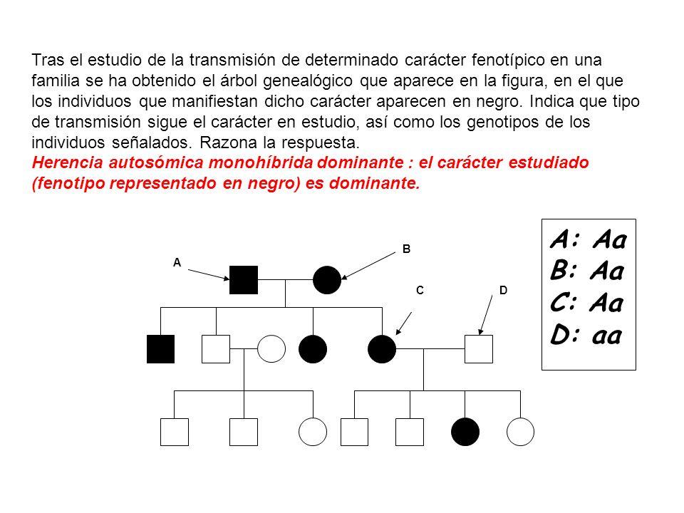 A B CD A: Aa B: Aa C: Aa D: aa Tras el estudio de la transmisión de determinado carácter fenotípico en una familia se ha obtenido el árbol genealógico