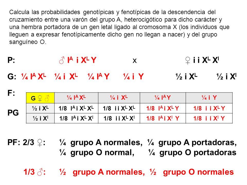 Calcula las probabilidades genotípicas y fenotípicas de la descendencia del cruzamiento entre una varón del grupo A, heterocigótico para dicho carácte