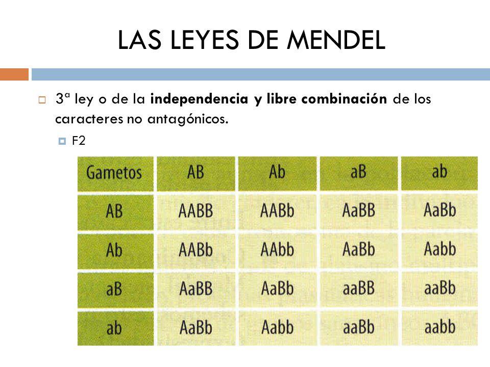 LAS LEYES DE MENDEL 3ª ley o de la independencia y libre combinación de los caracteres no antagónicos. F2