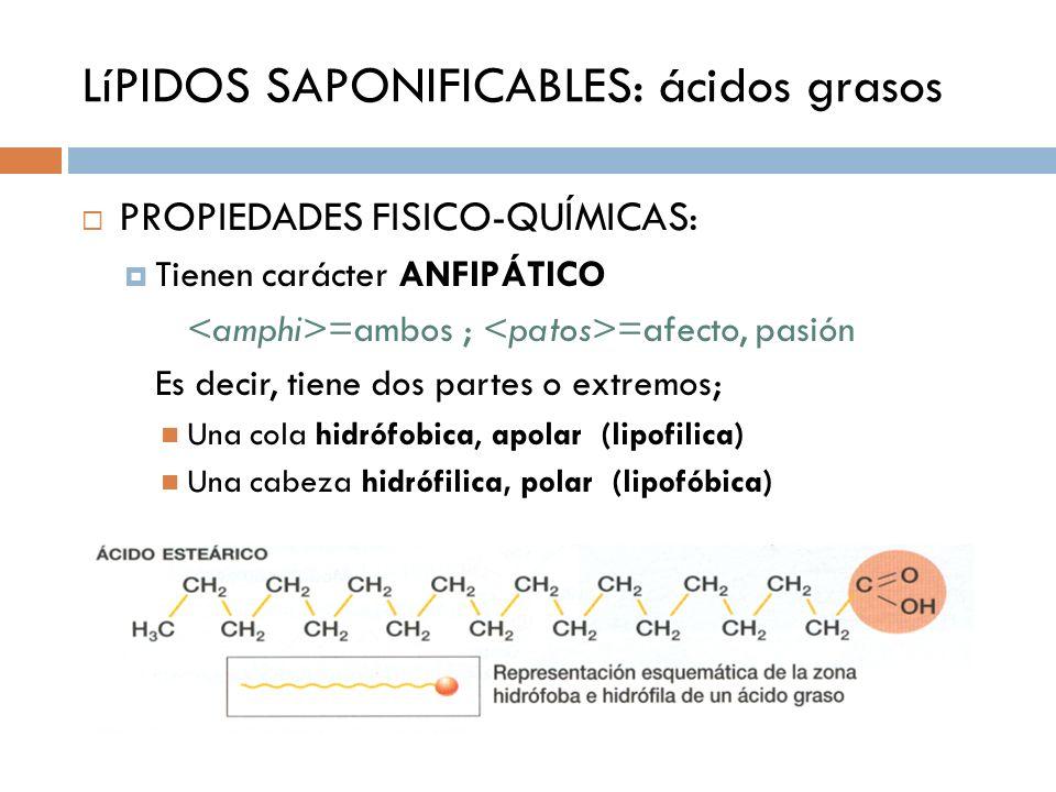 LíPIDOS SAPONIFICABLES: ácidos grasos PROPIEDADES FISICO-QUÍMICAS: Tienen carácter ANFIPÁTICO =ambos ; =afecto, pasión Es decir, tiene dos partes o ex