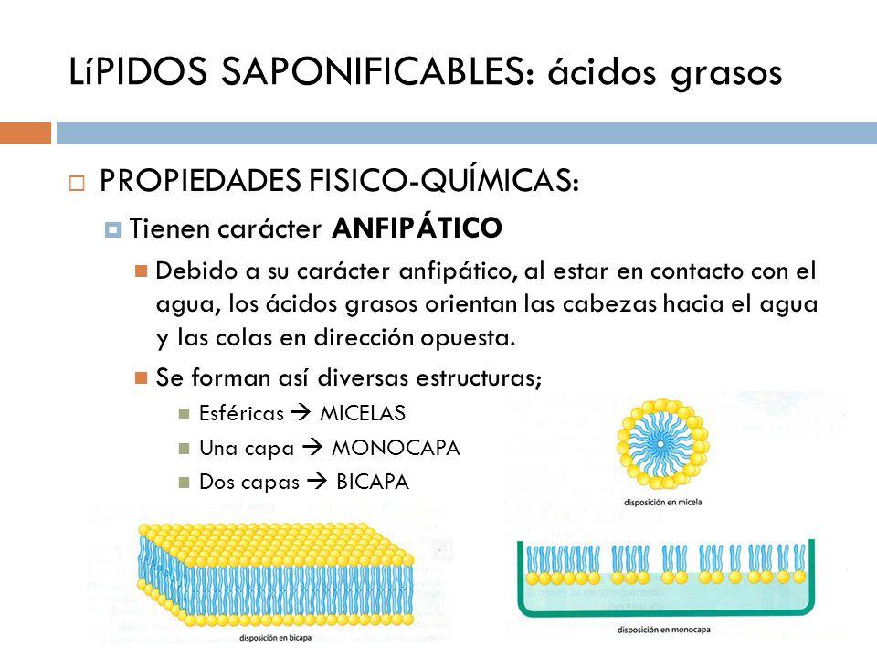LíPIDOS SAPONIFICABLES: ácidos grasos PROPIEDADES FISICO-QUÍMICAS: Tienen carácter ANFIPÁTICO Debido a su carácter anfipático, al estar en contacto co