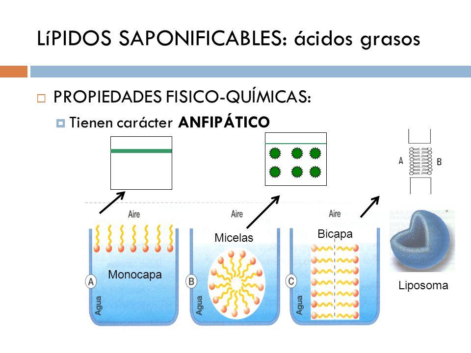 LíPIDOS SAPONIFICABLES: ácidos grasos PROPIEDADES FISICO-QUÍMICAS: Tienen carácter ANFIPÁTICO Liposoma Bicapa Micelas Monocapa
