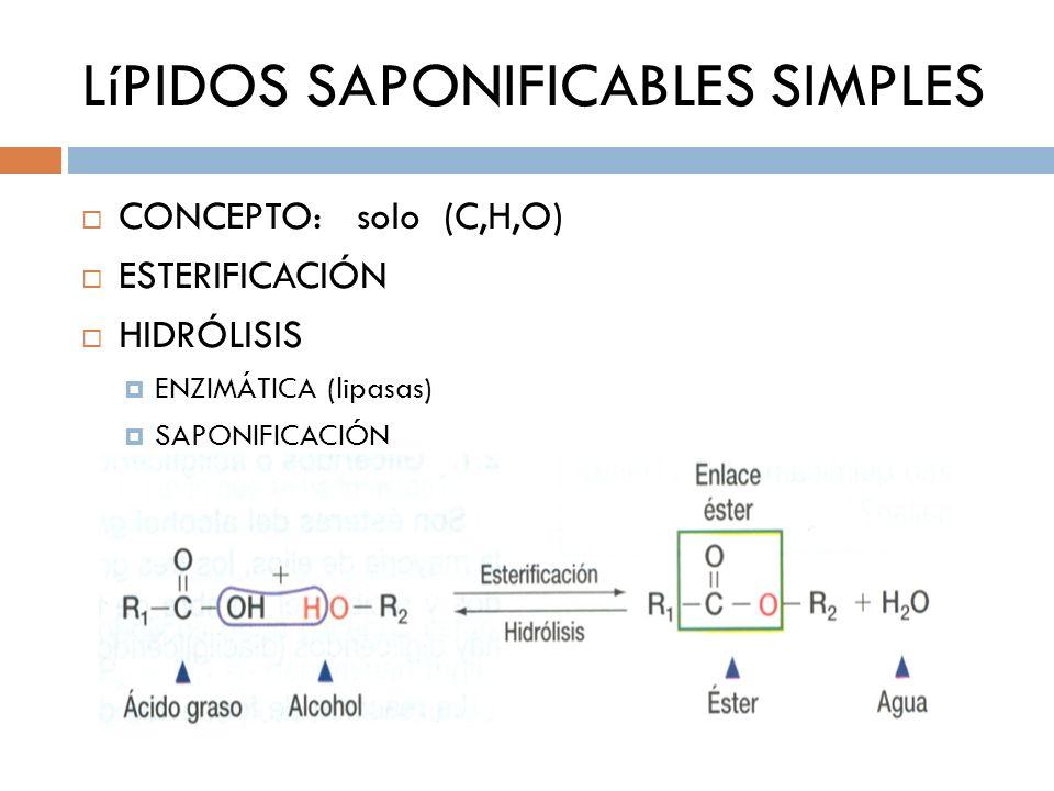 LíPIDOS SAPONIFICABLES SIMPLES CONCEPTO: solo (C,H,O) ESTERIFICACIÓN HIDRÓLISIS ENZIMÁTICA (lipasas) SAPONIFICACIÓN