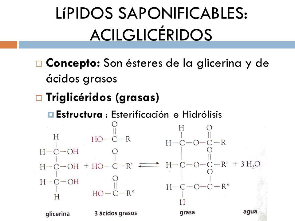 LíPIDOS SAPONIFICABLES: ACILGLICÉRIDOS Concepto: Son ésteres de la glicerina y de ácidos grasos Triglicéridos (grasas) Estructura : Esterificación e H