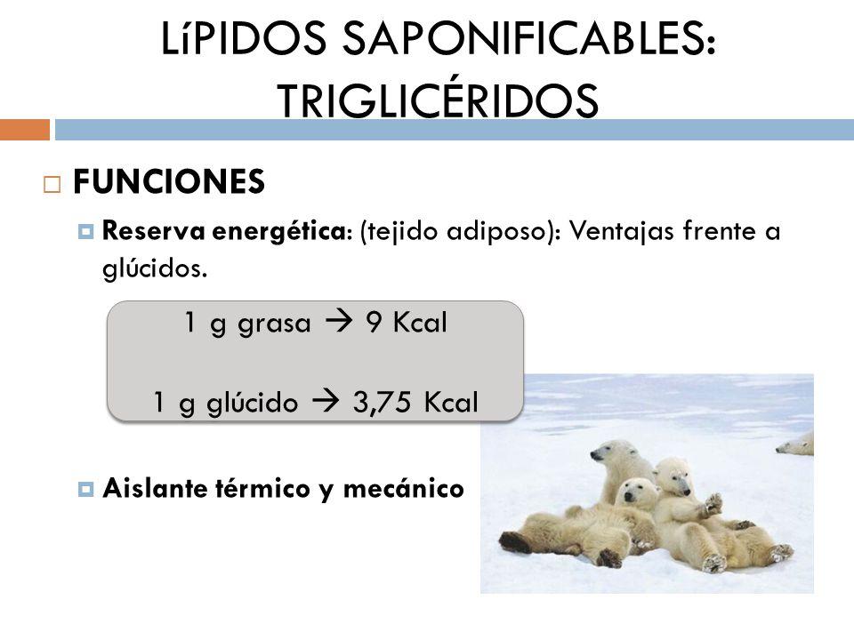 LíPIDOS SAPONIFICABLES: TRIGLICÉRIDOS FUNCIONES Reserva energética: (tejido adiposo): Ventajas frente a glúcidos. Aislante térmico y mecánico 1 g gras