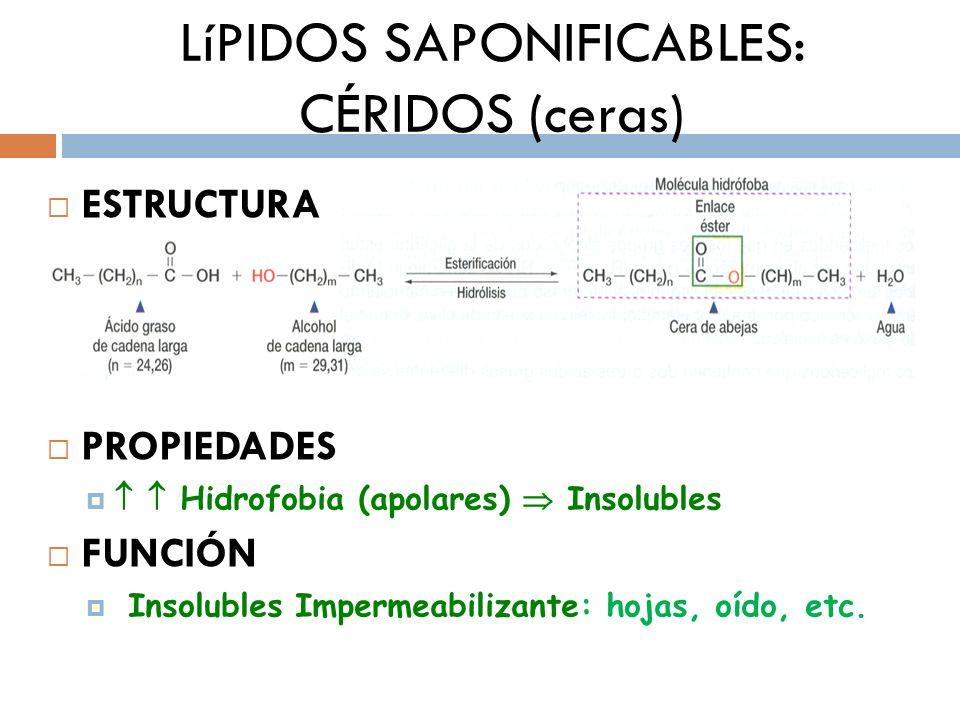 LíPIDOS SAPONIFICABLES: CÉRIDOS (ceras) ESTRUCTURA PROPIEDADES Hidrofobia (apolares) Insolubles FUNCIÓN Insolubles Impermeabilizante: hojas, oído, etc