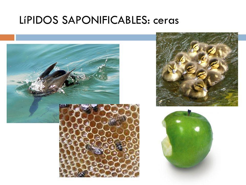 LíPIDOS SAPONIFICABLES: ceras