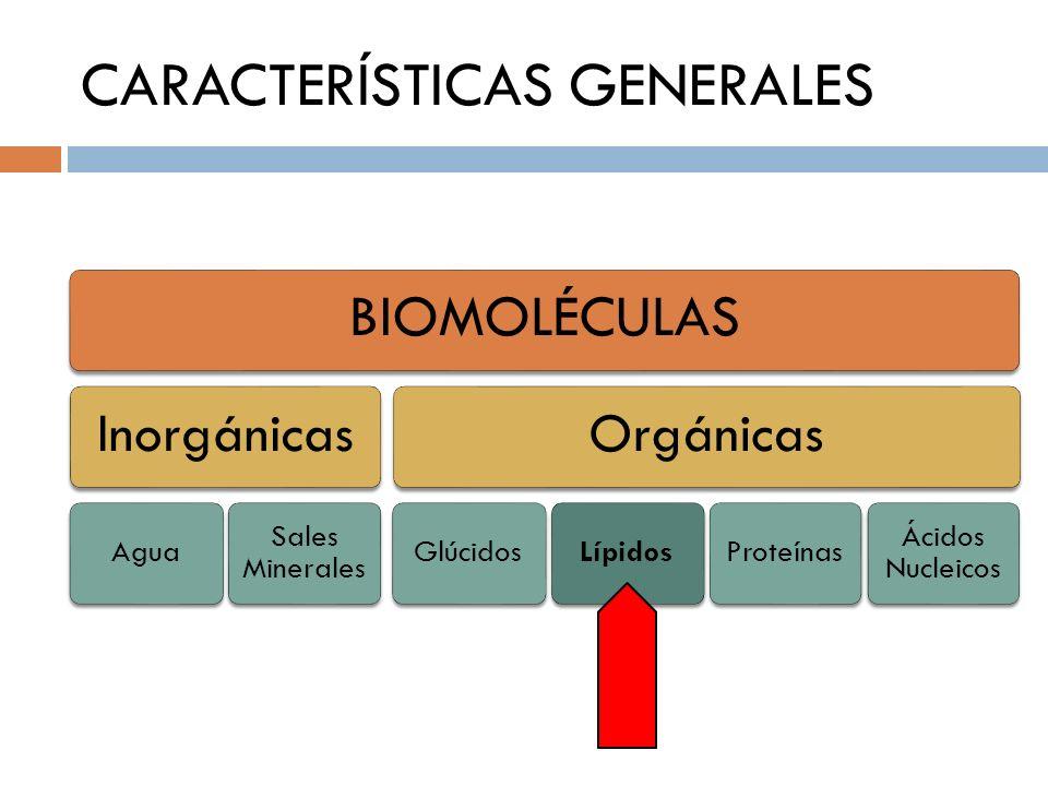 CARACTERÍSTICAS GENERALES BIOMOLÉCULAS Inorgánicas Agua Sales Minerales Orgánicas GlúcidosLípidosProteínas Ácidos Nucleicos