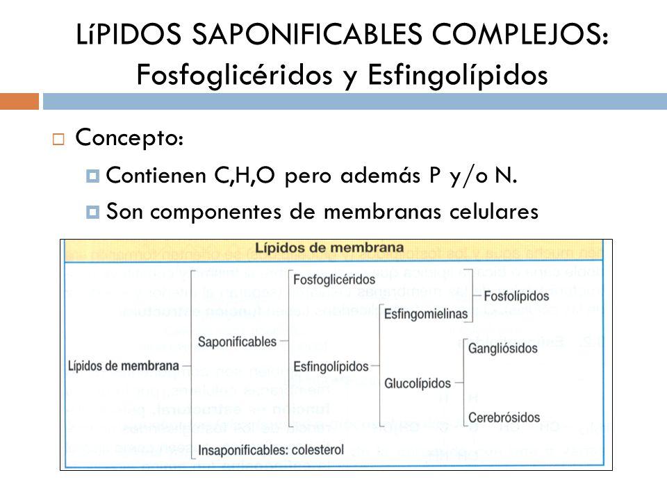 LíPIDOS SAPONIFICABLES COMPLEJOS: Fosfoglicéridos y Esfingolípidos Concepto: Contienen C,H,O pero además P y/o N. Son componentes de membranas celular