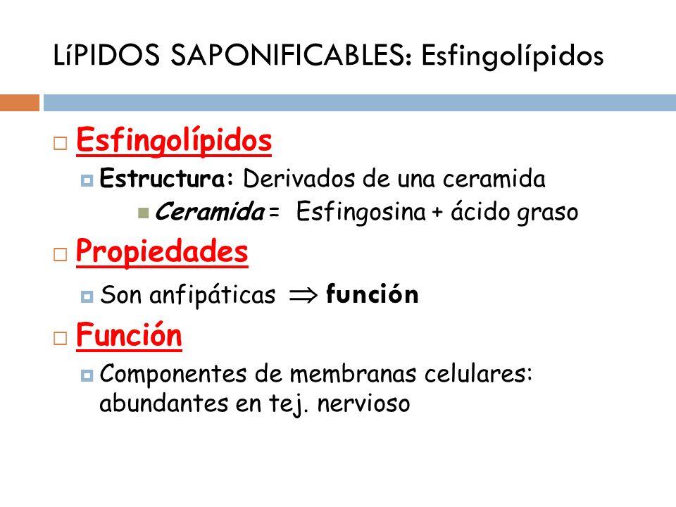 LíPIDOS SAPONIFICABLES: Esfingolípidos Esfingolípidos Estructura: Derivados de una ceramida Ceramida = Esfingosina + ácido graso Propiedades Son anfip
