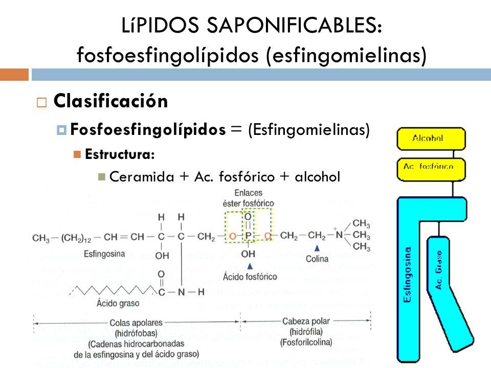 Clasificación Fosfoesfingolípidos = (Esfingomielinas) Estructura: Ceramida + Ac. fosfórico + alcohol LíPIDOS SAPONIFICABLES: fosfoesfingolípidos (esfi