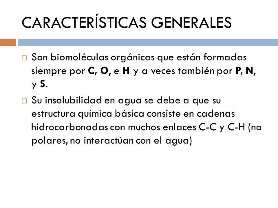 CARACTERÍSTICAS GENERALES Son biomoléculas orgánicas que están formadas siempre por C, O, e H y a veces también por P, N, y S. Su insolubilidad en agu