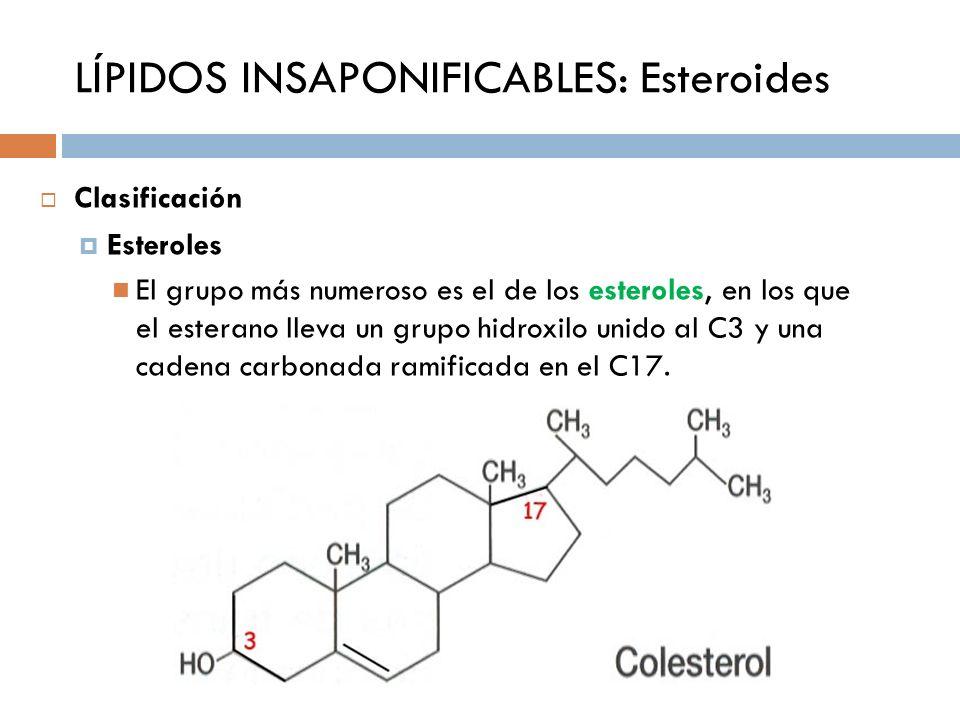 LÍPIDOS INSAPONIFICABLES: Esteroides Clasificación Esteroles El grupo más numeroso es el de los esteroles, en los que el esterano lleva un grupo hidro